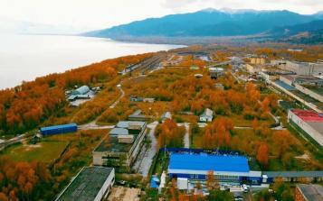 深藏原始白桦林、贝加尔湖水滋养 探秘西伯利亚白桦茸原产