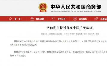 俄新社报道、商务部关注,西伯利亚白桦茸在中国广受欢迎