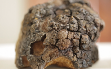 药用真菌白桦茸中都有哪些神奇成分?这篇文章讲全了!