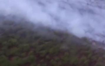 西伯利亚森林火灾面积达300万公顷!白桦茸会涨价吗?